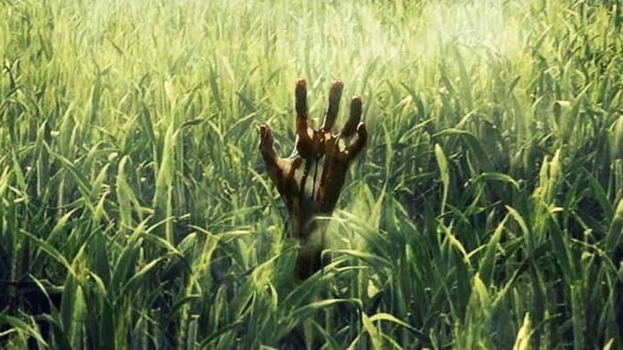 RECENZE: Je horor Ve vysoké trávě povedenou adaptací Stephena Kinga?