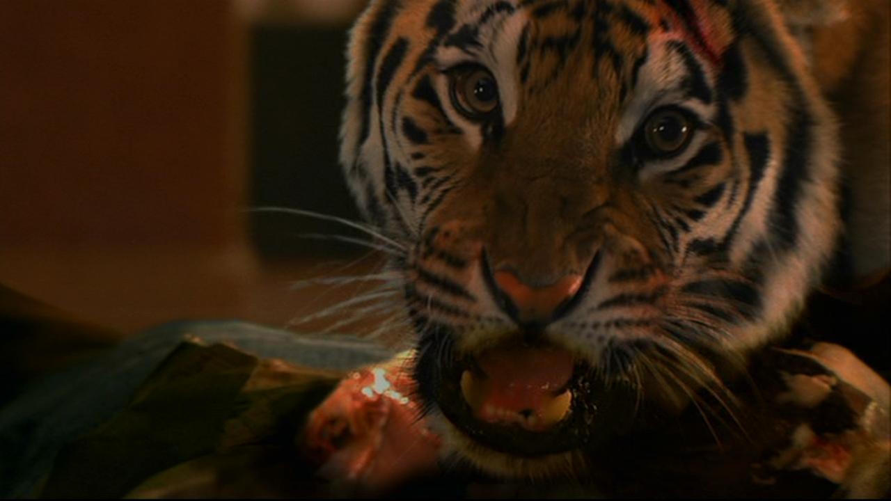 Bengálský tygr (2010)