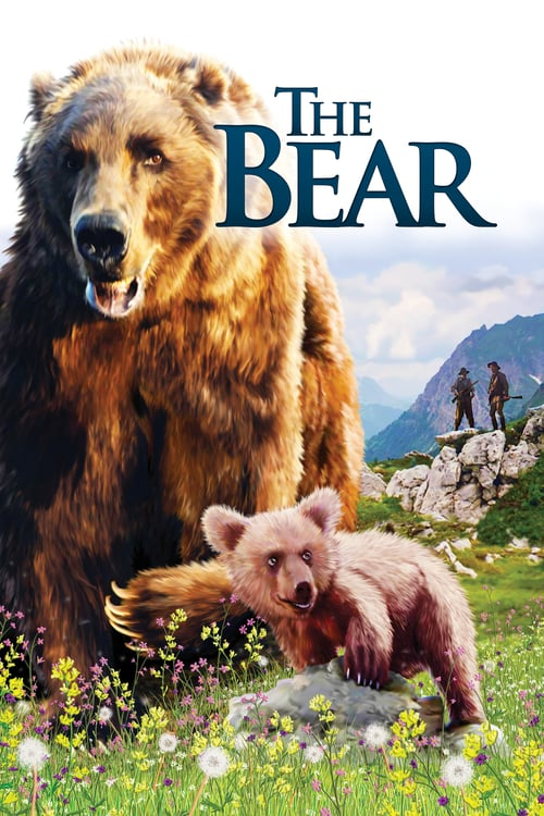 Medvěd online