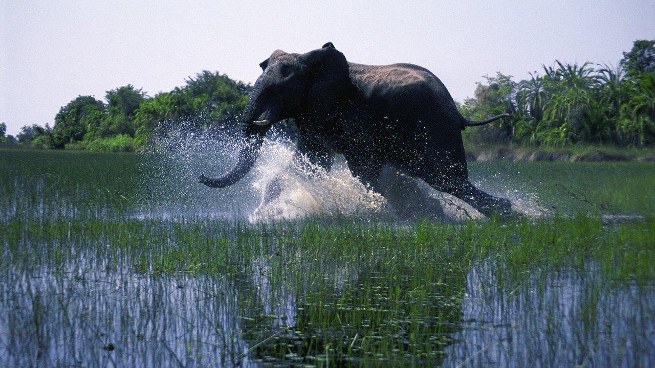African Safari online