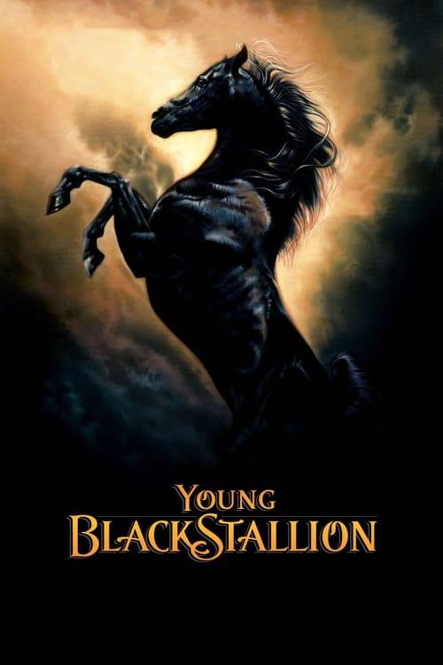 Mladý Černý hřebec online