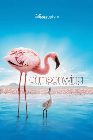 Disneynature: The Crimson Wing - Mystery of the Flamingos online