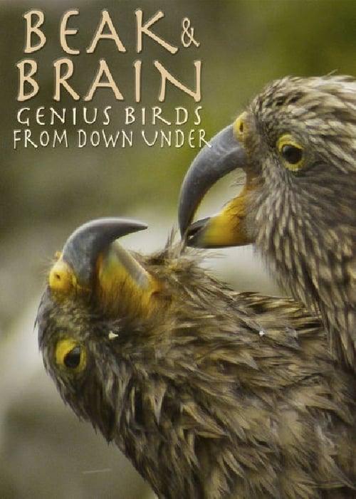 Ptačí inteligence bez hranic online