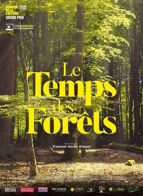 Lesy na prodej online