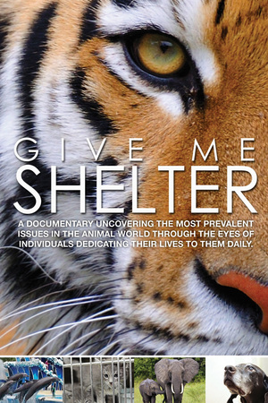 Give Me Shelter online
