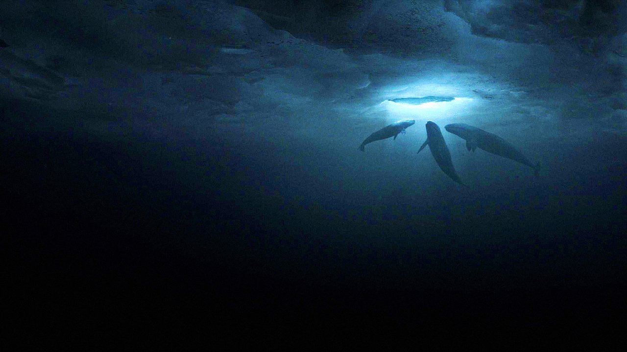 Máme rádi velryby online