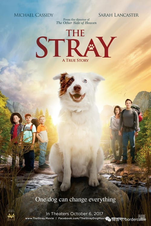 The Stray online