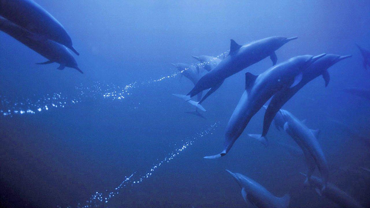 Tajemství oceánu - Tržby a návštěvnost