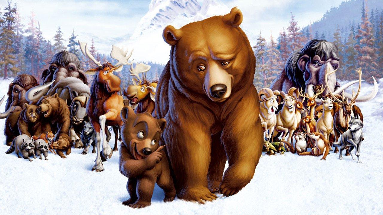 Medvědí bratři - Tržby a návštěvnost