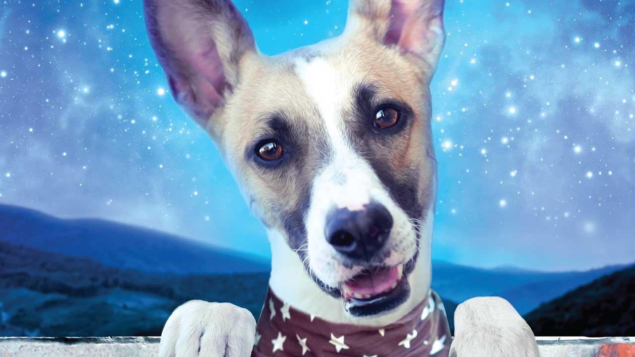 Gump - pes, který naučil lidi žít - Tržby a návštěvnost