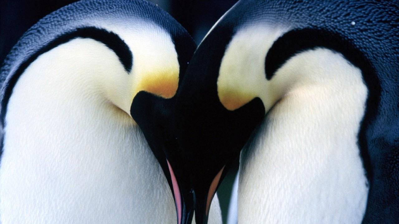 Putování tučňáků - Tržby a návštěvnost