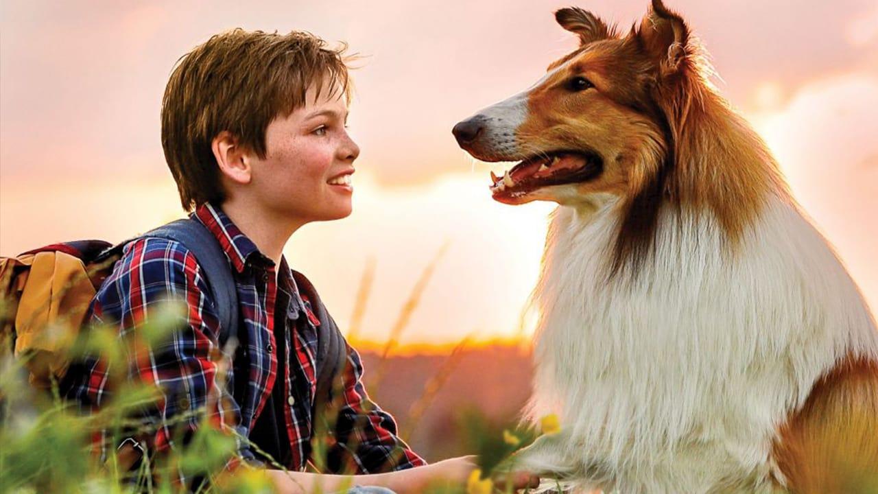 Lassie se vrací - Tržby a návštěvnost