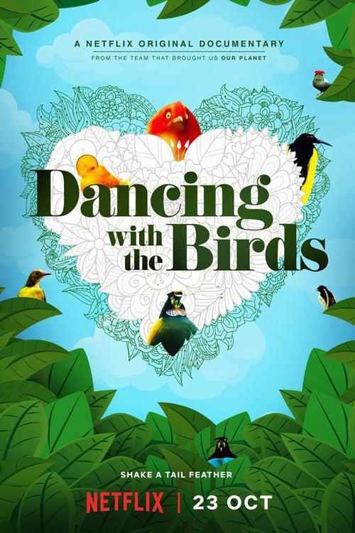 Když ptáci tančí online