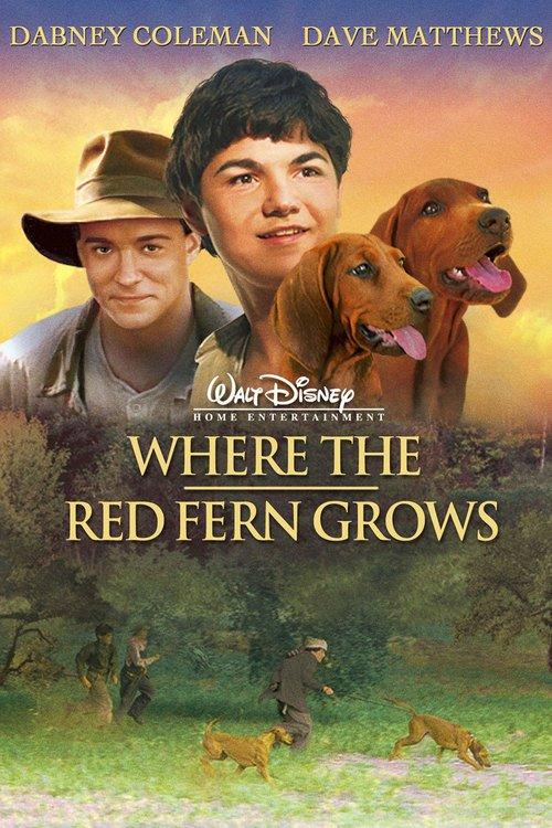Kde roste červené kapradí online