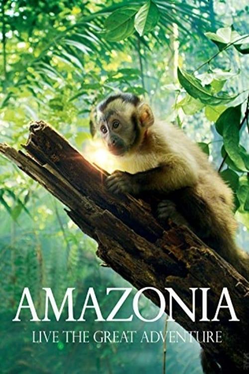 Amazonia online