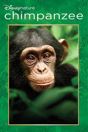Chimpanzee online