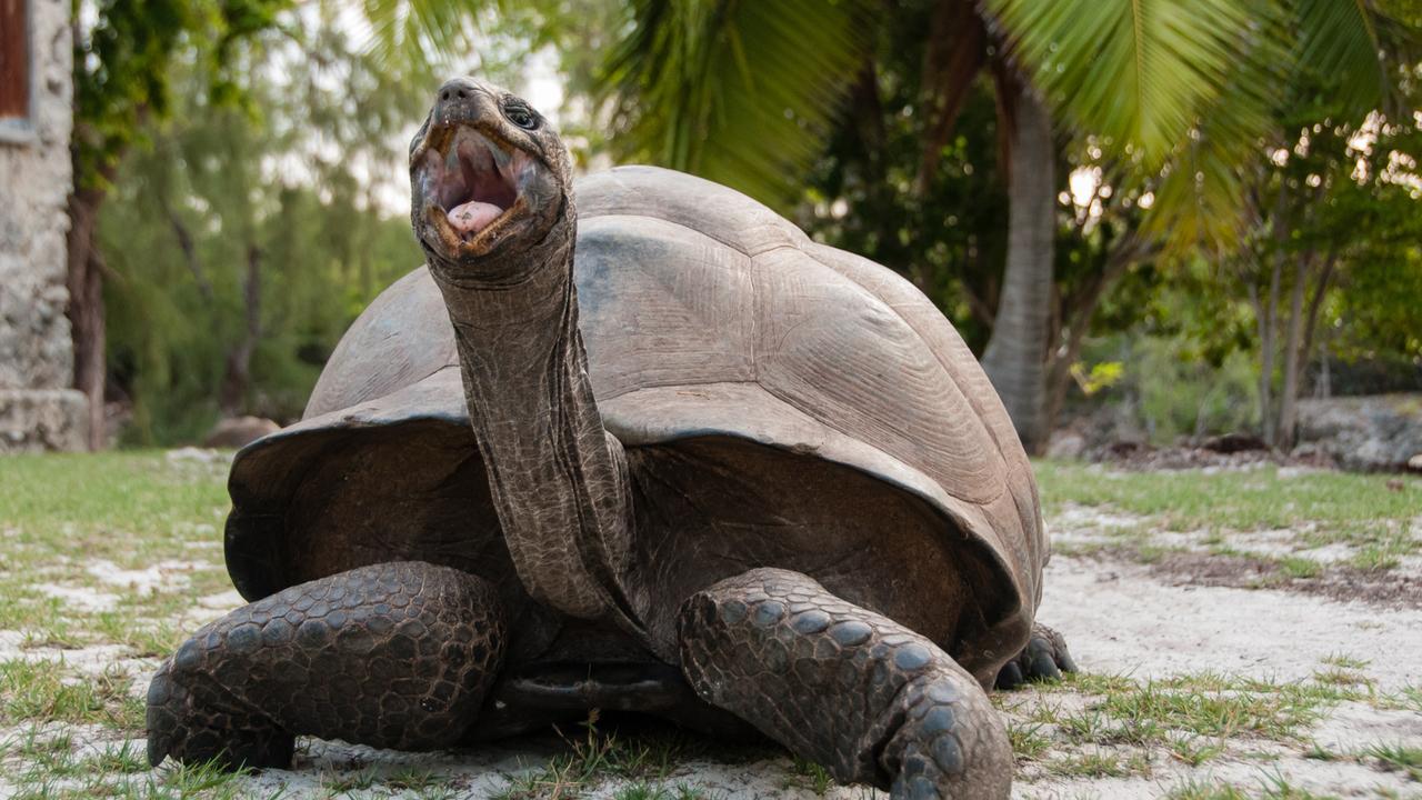 Aldabra: Byl jednou jeden ostrov - Tržby a návštěvnost
