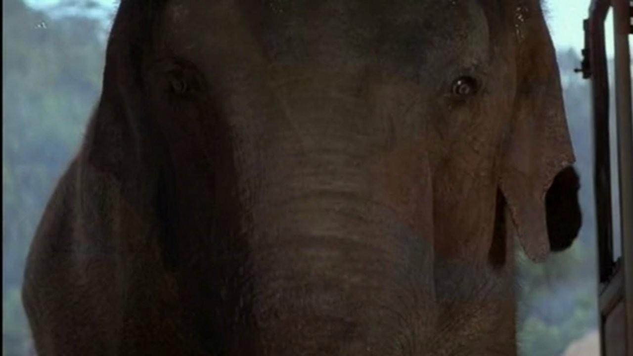 Operace Slon - Tržby a návštěvnost