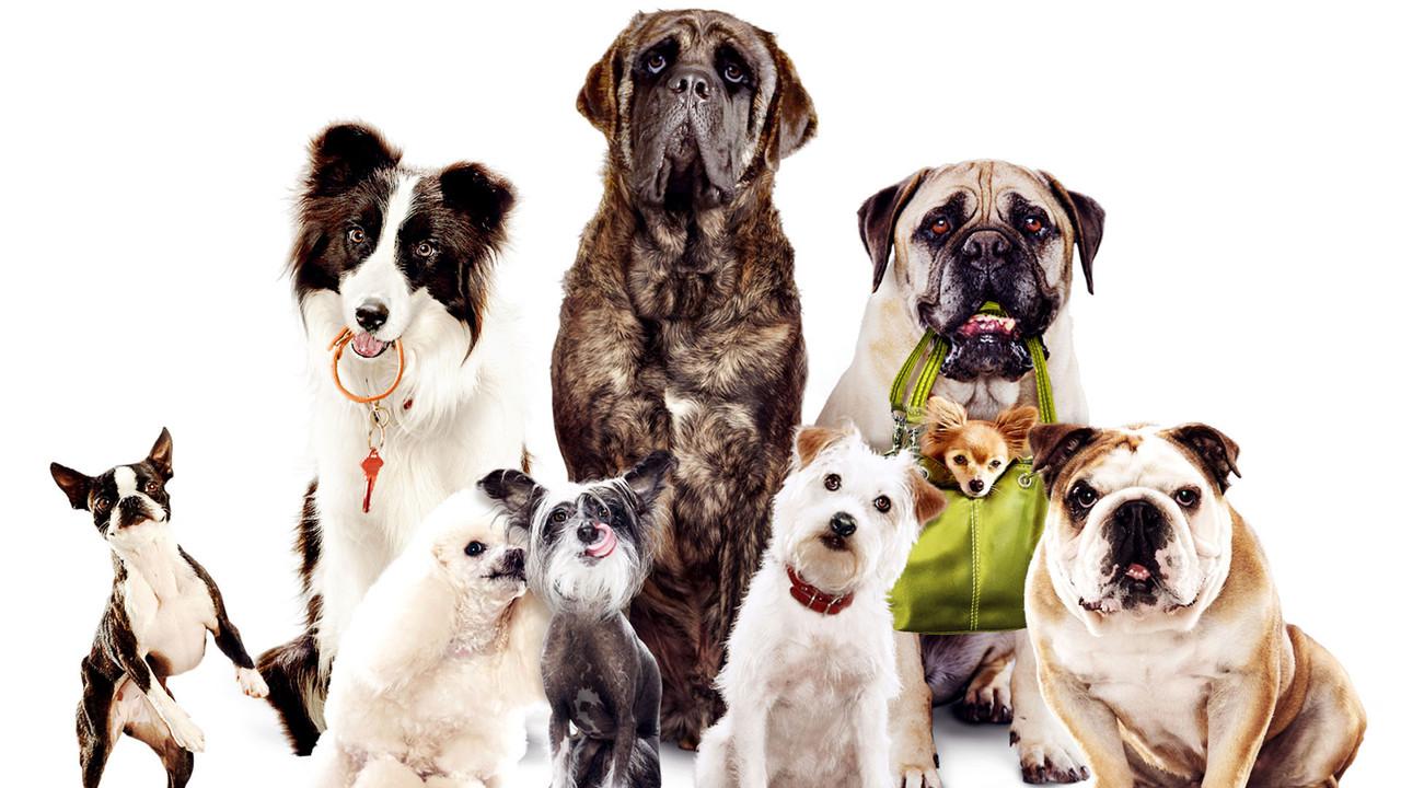 Hotel pro psy - Tržby a návštěvnost