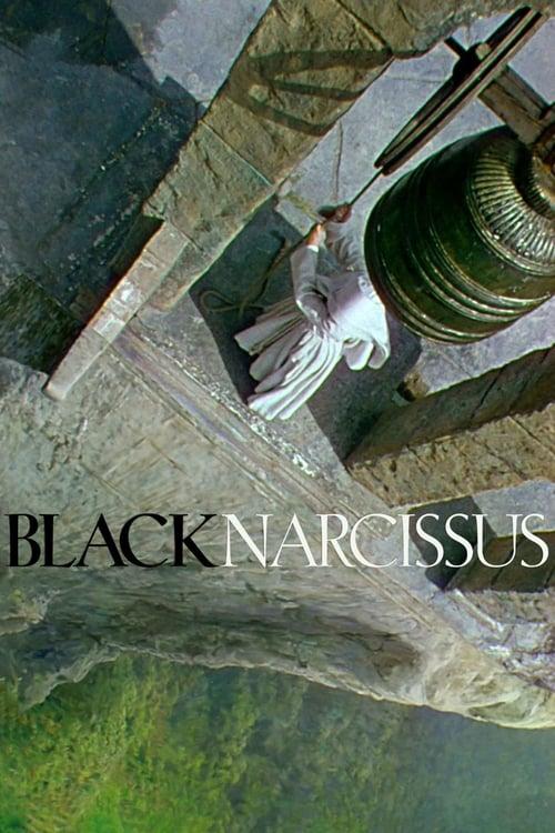 Černý narcis online