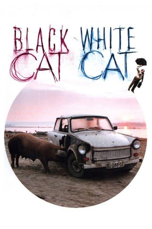 Černá kočka, bílý kocour online