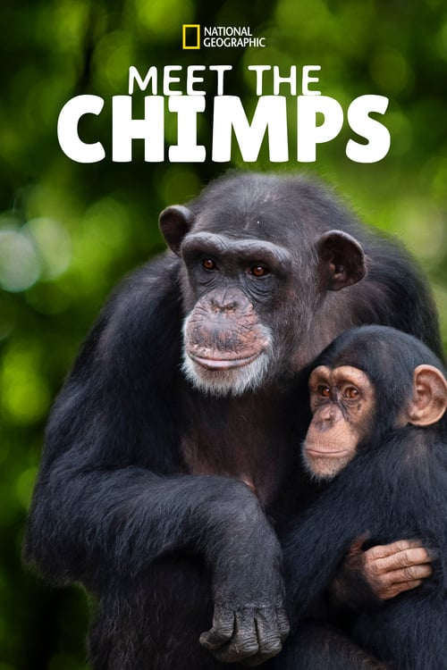 Meet The Chimps online