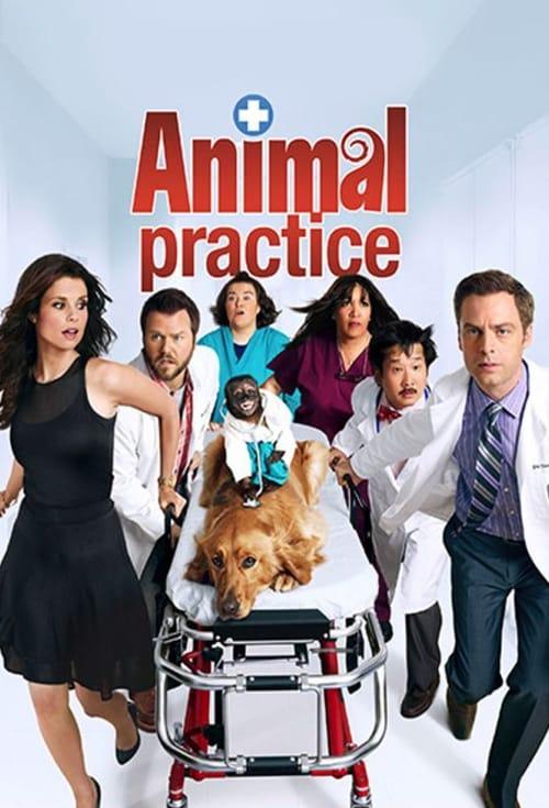 Animal Practice online