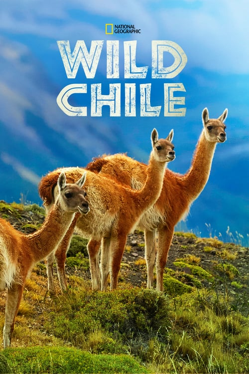 Do divočiny: Chile online