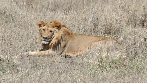 IMAX Africa The Serengeti
