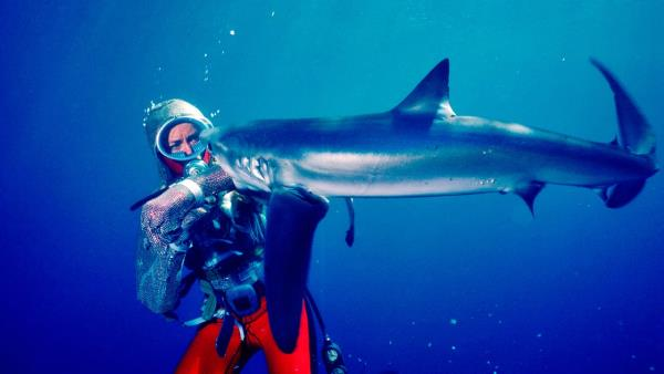 valerie-taylor-playing-with-sharks