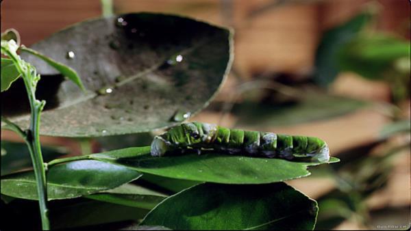 Království hmyzu 3D