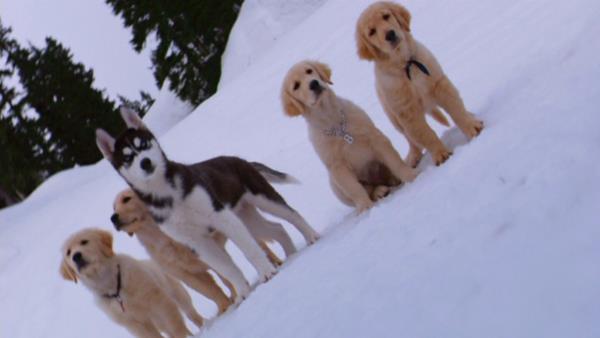 Sněžní přátelé