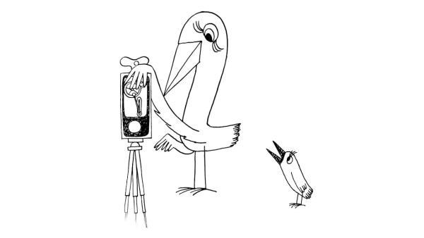 Ptáci Koháci