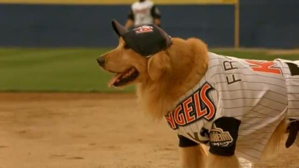 Buddy - hvězda baseballu