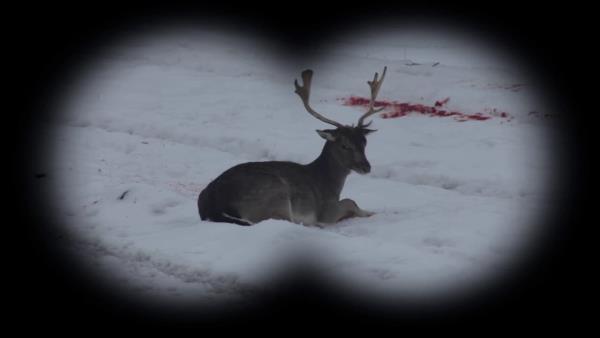 lovu-zdar