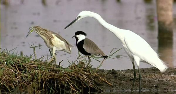 ptaci-svet
