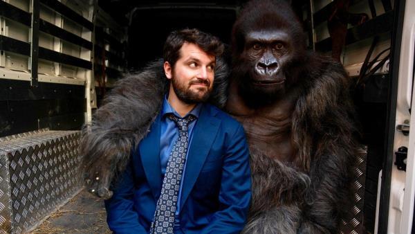 Pozor na gorilu