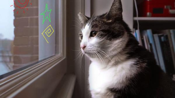 kitty-love-pocta-kockam