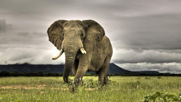 Omluva slonům
