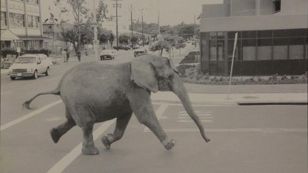 Tyke Elephant Outlaw