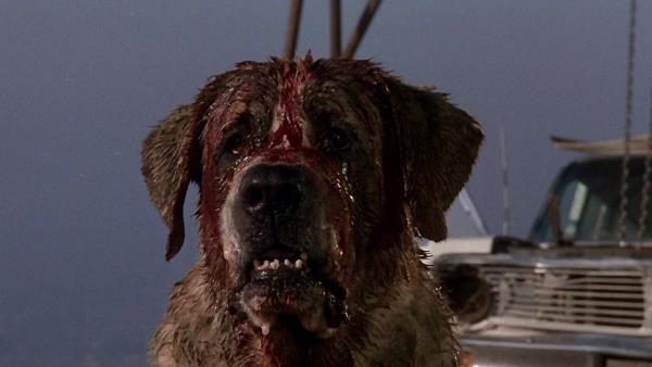 Cujo, vzteklý pes