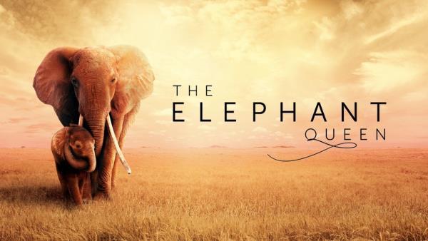 Sloní královna