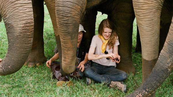 Love & Bananas: An Elephant Story