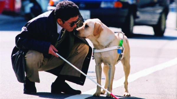 Quill: The Life of a Guide Dog