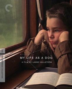 Můj život jako pes