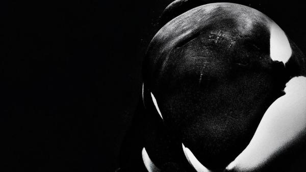 Blackfish download