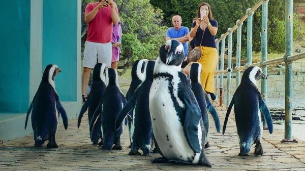 Město tučňáků