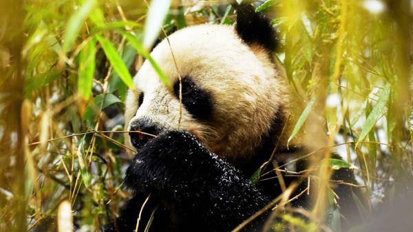 Wild China download