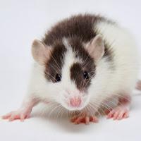 mice farm